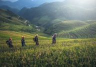 Agriculture durant notre circuit sri lanka et vietnam