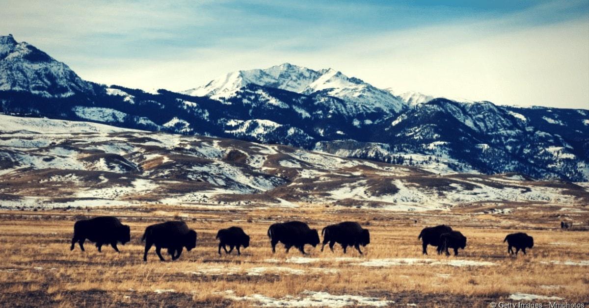 Évasions et détentes - Yellowstone