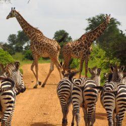 La Tanzanie, une perle africaine à explorer