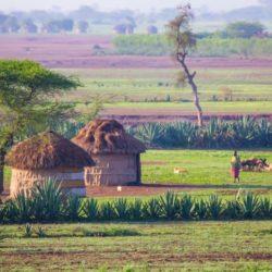 La Tanzanie, un must pour les amoureux de la nature
