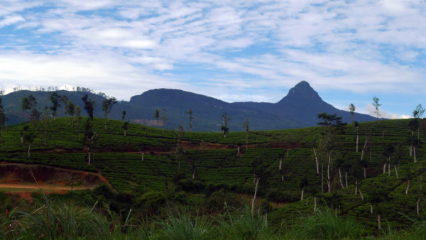Adam's Peak pour la randonnée au Sri Lanka